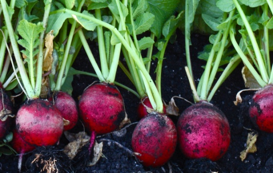 vegetable-growing-tips